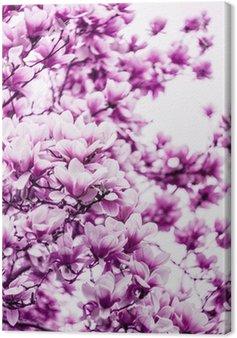 Obraz na Płótnie Kwiat kwiat magnolii