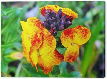 Obraz na Płótnie Kwiat lak