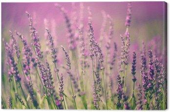 Obraz na Płótnie Kwiat lawendy