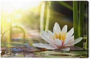 Obraz na Płótnie Kwiat lotosu