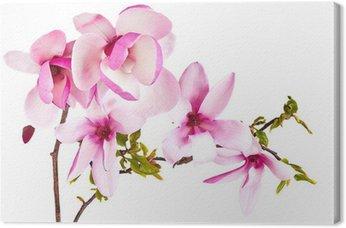 Obraz na Płótnie Kwiat magnolii na białym tle