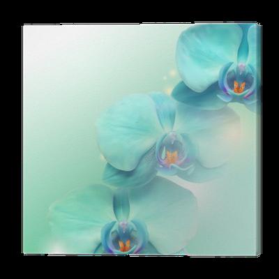 Obraz na Płótnie Kwiat orchidei w tle