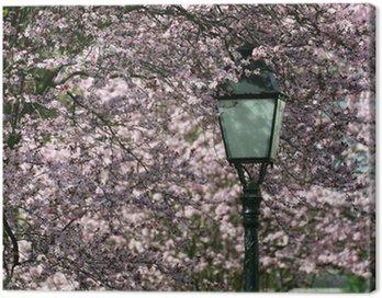 Obraz na Płótnie Kwiat wiśni wiosna, słońce, dobre samopoczucie rośnie drzewo parku jar