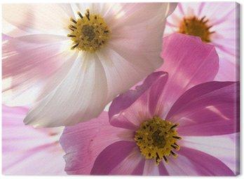 Obraz na Płótnie Kwiat