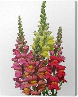 Obraz na Płótnie Kwiaty Snapdragon