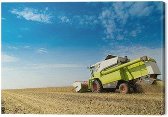 Obraz na Płótnie Łączenie zbiorów soi w polu kombajn
