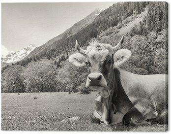 Ładna krowa