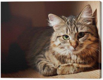 Obraz na Płótnie Ładne kota