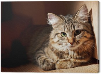 Ładne kota