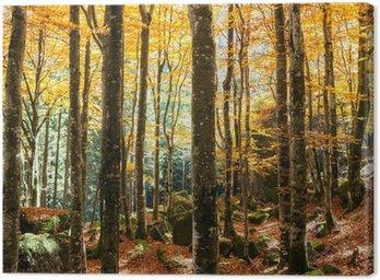 Obraz na Płótnie Las bukowy jesienią