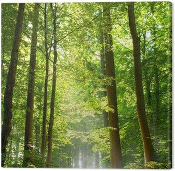 Obraz na Płótnie Las i mgła