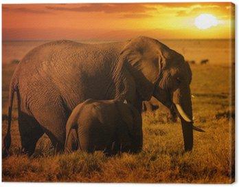 Obraz na Płótnie Las słoń z jej łydki o zachodzie słońca