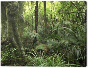 Obraz na Płótnie Las tropikalny