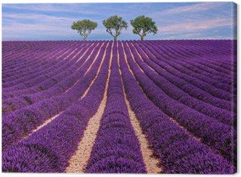 Lavender pola słońca letnich krajobraz z drzewa