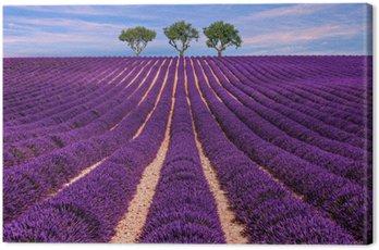 Obraz na Płótnie Lavender pola słońca letnich krajobraz z drzewa