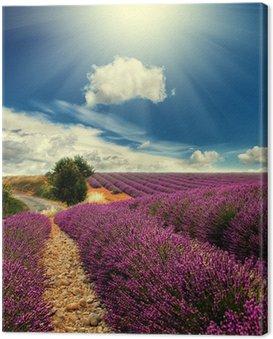 Obraz na Płótnie Lawendowego pola