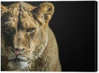 Obraz na Płótnie LEONE - LION