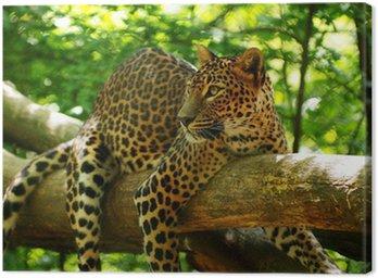 Obraz na Płótnie Leopard 1