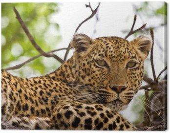 Obraz na Płótnie Leopard leżącego w drzewo