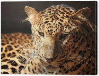 Leopard pantera spoczynku zrelaksować się na drzewie