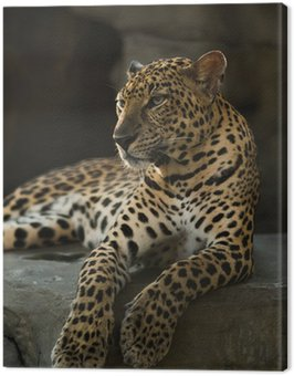 Obraz na Płótnie Leopard pantera