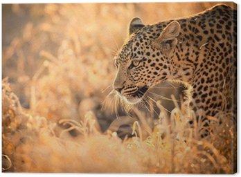 Obraz na Płótnie Leopard Zwiedzanie o zachodzie słońca