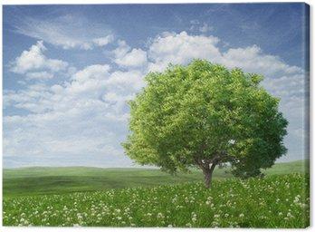 Obraz na Płótnie Letni krajobraz z zielonym drzewem