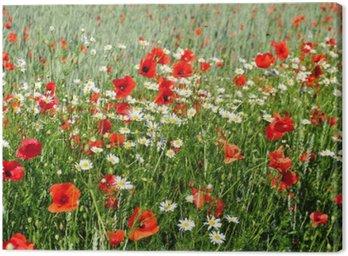 Obraz na Płótnie Letnie kwiaty na łące