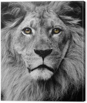 Obraz na Płótnie Lew oczy