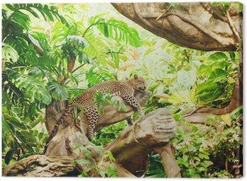 Obraz na Płótnie Leżąc (sypialnia) lampart na gałęzi drzewa