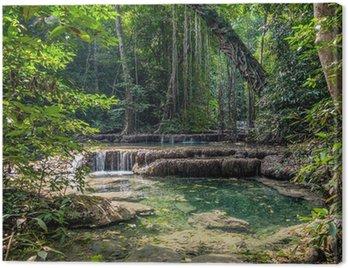Obraz na Płótnie Liany w dżungli. Erawan National Park w Tajlandii
