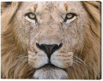 Obraz na Płótnie Lion
