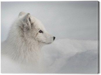 Obraz na Płótnie Lis polarny
