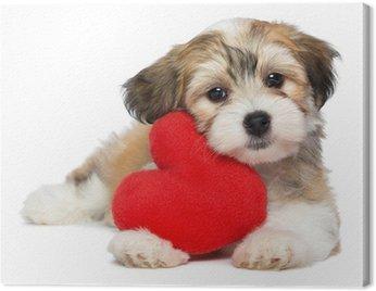 Lover Valentine Hawańczyk pies puppy z czerwonym sercem