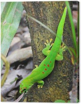 Obraz na Płótnie Madagascar day gecko ..