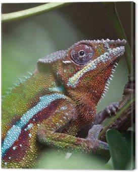 Obraz na Płótnie Madagaskar Chameleon w Zoo Zurych (Szwajcaria)