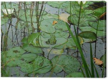 Obraz na Płótnie Mała żaba siedzi na liści