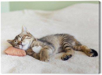 Obraz na Płótnie Małe Kitty Z Red Pillow i mysz
