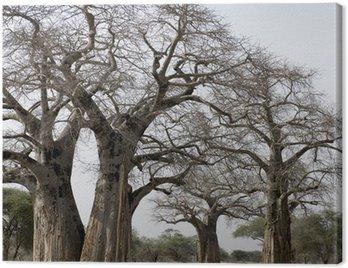 Obraz na Płótnie Malowniczy widok dużych drzew