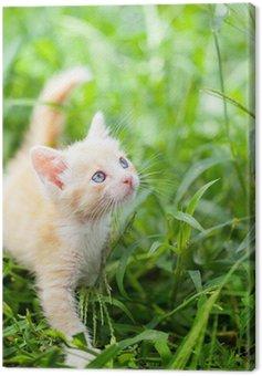 Obraz na Płótnie Mały czerwony kot