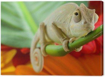 Obraz na Płótnie Mały kameleon