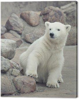 Obraz na Płótnie Mały niedźwiedź polarny