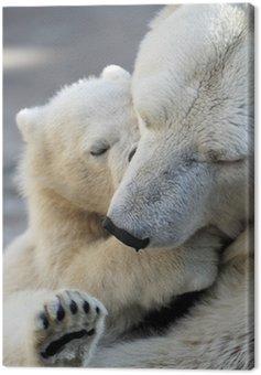 Mały polarny niedźwiadek bawi się z mamą