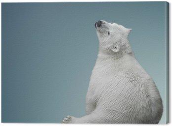 Mały polarny niedźwiadek
