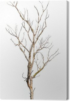 Obraz na Płótnie Martwy pień drzewa na białym tle - klimat