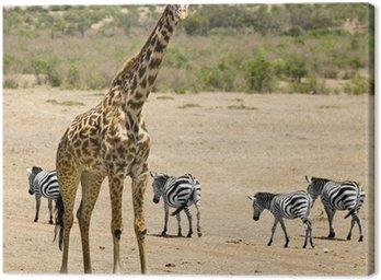 Obraz na Płótnie Masai żyrafa