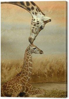 Obraz na Płótnie Matka-żyrafa i baby-żyrafa