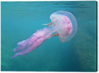 Obraz na Płótnie Mediterranean meduzy w pobliżu powierzchni