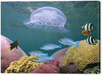 Meduza z korali i ryb