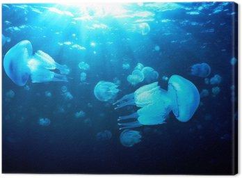 Obraz na Płótnie Meduzy pływające w ciemnoniebieskie wody, Morze Czarne